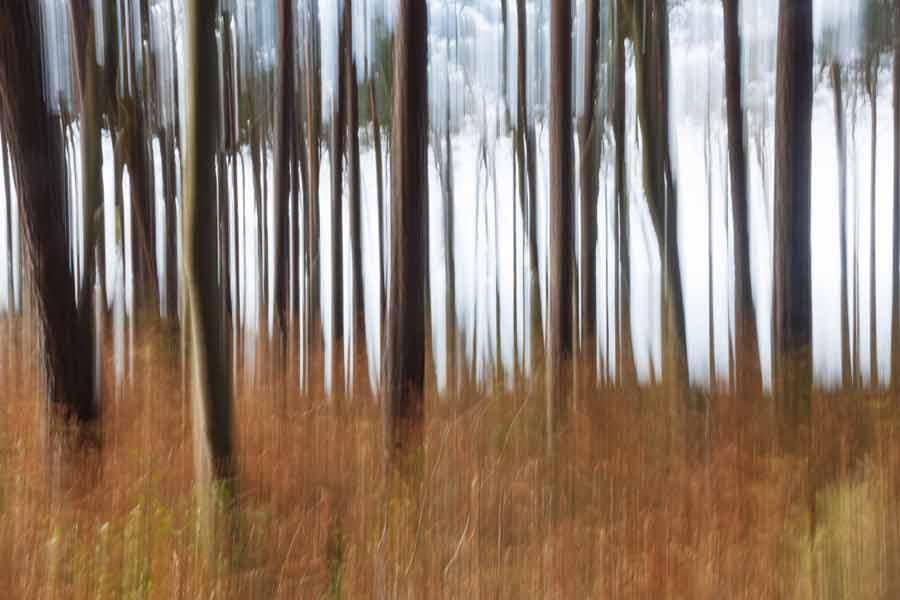 Dorian - Betrunkene Bäume