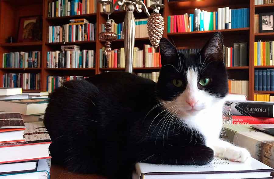 Der Tisch - Cat Conten rulez!