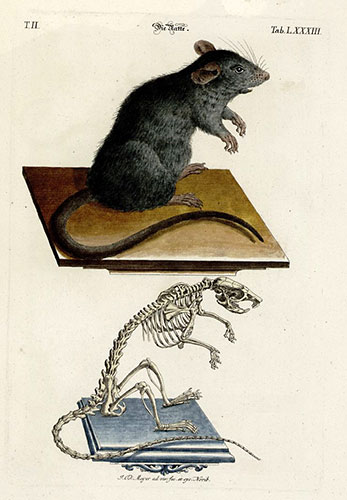 Leseratte, Bücherwurm und Co.
